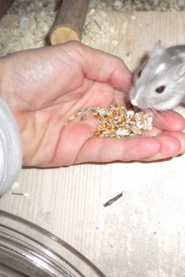 feeding the gerbil in your hand