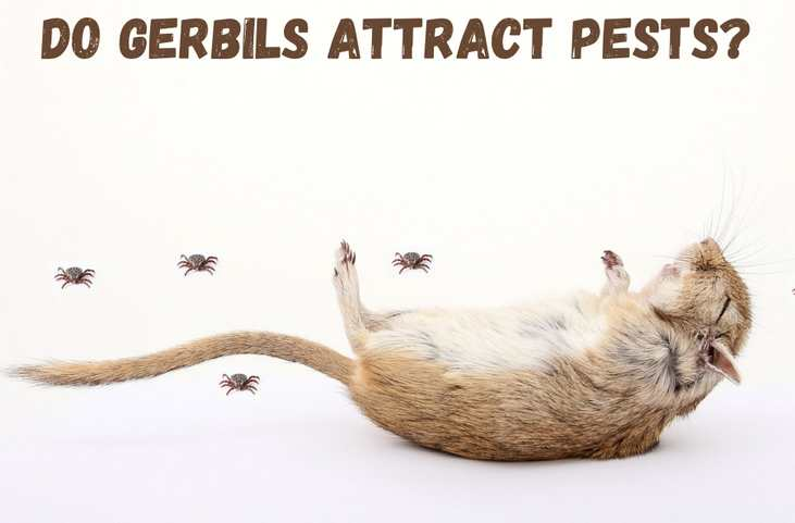 Do gerbils attract pets