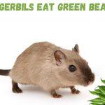 can gerbils eat green beans