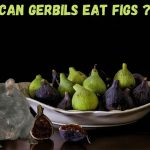 Can gerbils eat figs