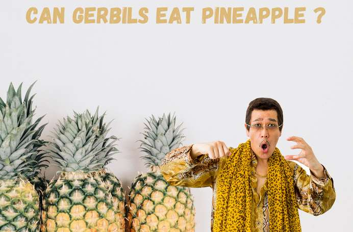 Can gerbils eat pineapple