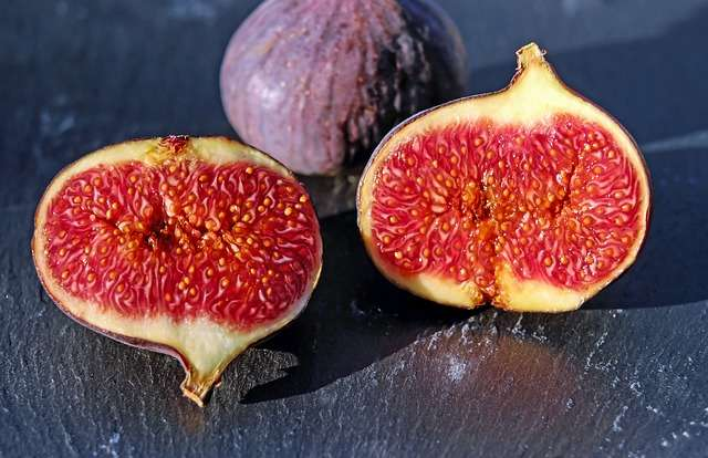 are figs good for gerbils