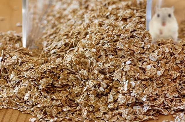 are oats safe for gerbils