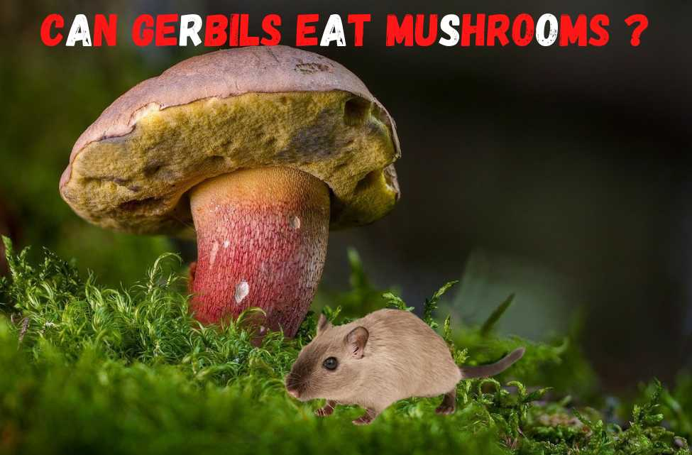 can gerbils eat mushrooms