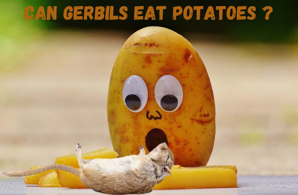 can gerbils eat potatoes